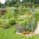 Allotment Picture 1
